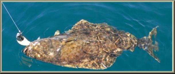 merikalastus norjassa